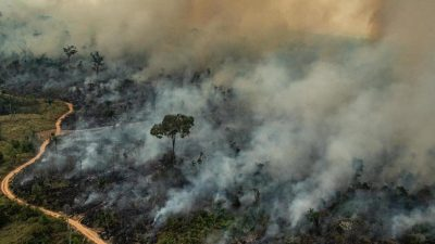 Forest Fires in Amazon